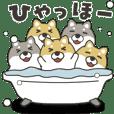 Move! Full of shibainu 4