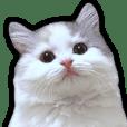 TSUKUSHI of cat