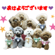 Real DOG 9Toy Poodle