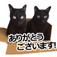 Black cat MEGURO and MOGURO