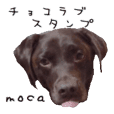 Choco Lab moca's stamp