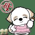 【Big】お母さんシーズー犬22
