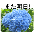 A floral message! Hydrangea
