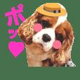 キャバリア姫♡hana