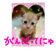 sticker of a cute kitten