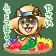 新潟弁を話す柴犬たち4(茶柴&黒柴)