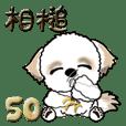 シーズー犬50『あいづち』