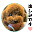 Toy Poodle Lion 6 honorific ver