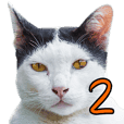 Cat Lumpini park 2 (Matur)