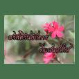 Daily Sawasdee
