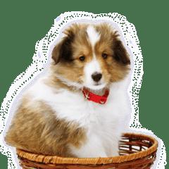 puppy sheltie flora line stickers line store
