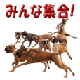 Riesen Stern Boxer 2(ボクサー犬スタンプ)