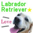Labrador Retriever POP Sticker