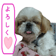 Shih tzu dog name mini