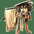 Samurai dog masamune