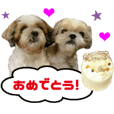 Real DOG Shih Tzu - Hina & Noa -