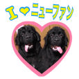 Newfie Photo Sticker
