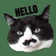 Mustache cat Chibi
