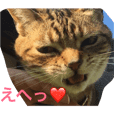 ぶさかわ猫まりい