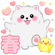 cute white Pomeranian spring stickers
