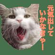Cat employee