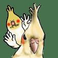 Creatures such as the cockatiel 8