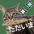 猫にゃ・にゃ・にゃ!part3