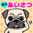 Daikichi of the pug! Greetings sticker