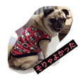 rin-chan  cute pug vol.2