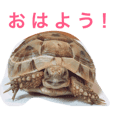 kotetsu of the land tortoise