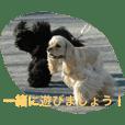 のあ桜(コッカー)+える