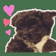 hoppy_sticker