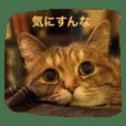 クール猫サチコさん