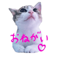 Cute cats' stickers
