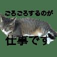 片足猫。ねこにゃん。ネギ。ニャン太郎。
