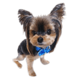 Yorkshireterrier's Sticker