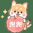 fluffy fat Shiba watercolor(tw)