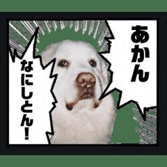 グレートピレニーズのあいちゃん!関西弁