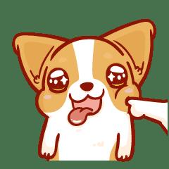 柯基犬卡卡 - 動起來 vol.2