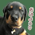 KING ASH ふぁみり~! Vol.2