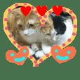 kittens stamp(Popo's garden)