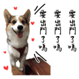 corgi the dog Da Xia