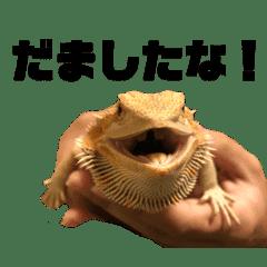 はちゅたち〜ときどきカエル〜