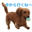 photo sticker of dog
