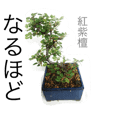 ミニ盆栽スタンプ。