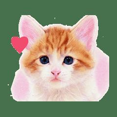 目羅健嗣 猫アートコレクション 6