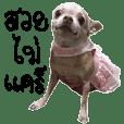 Wasabi Happy Dog