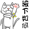 ian cat of white