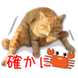 Japanese stray cats photo sticker