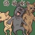 Taiwan Dogs